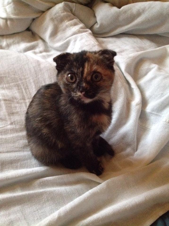 кошка ан кровати