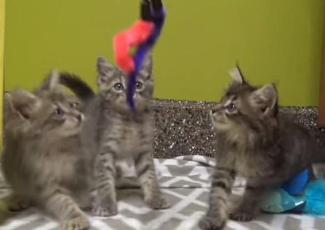 Котята и игрушка