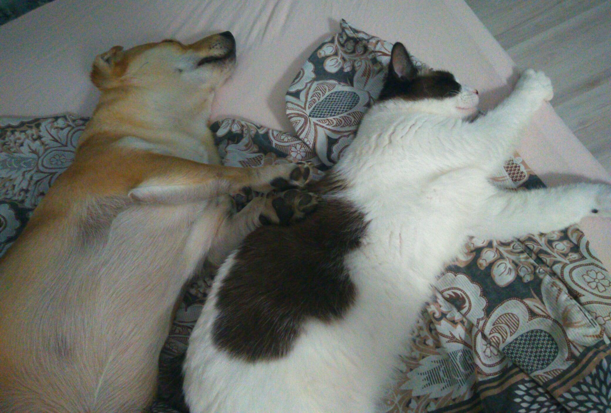 пес и кошка