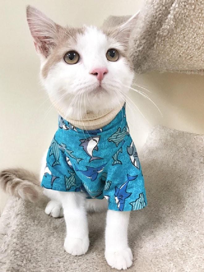 Котик одетый