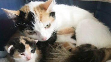 cats' family