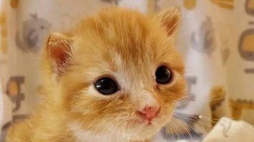 ginger Pico