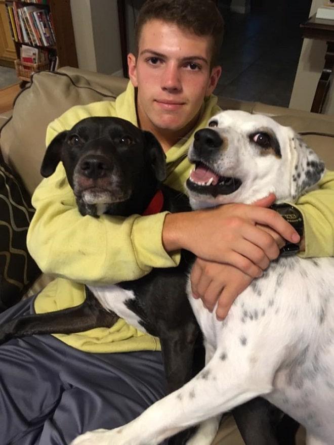 Парень и собаки