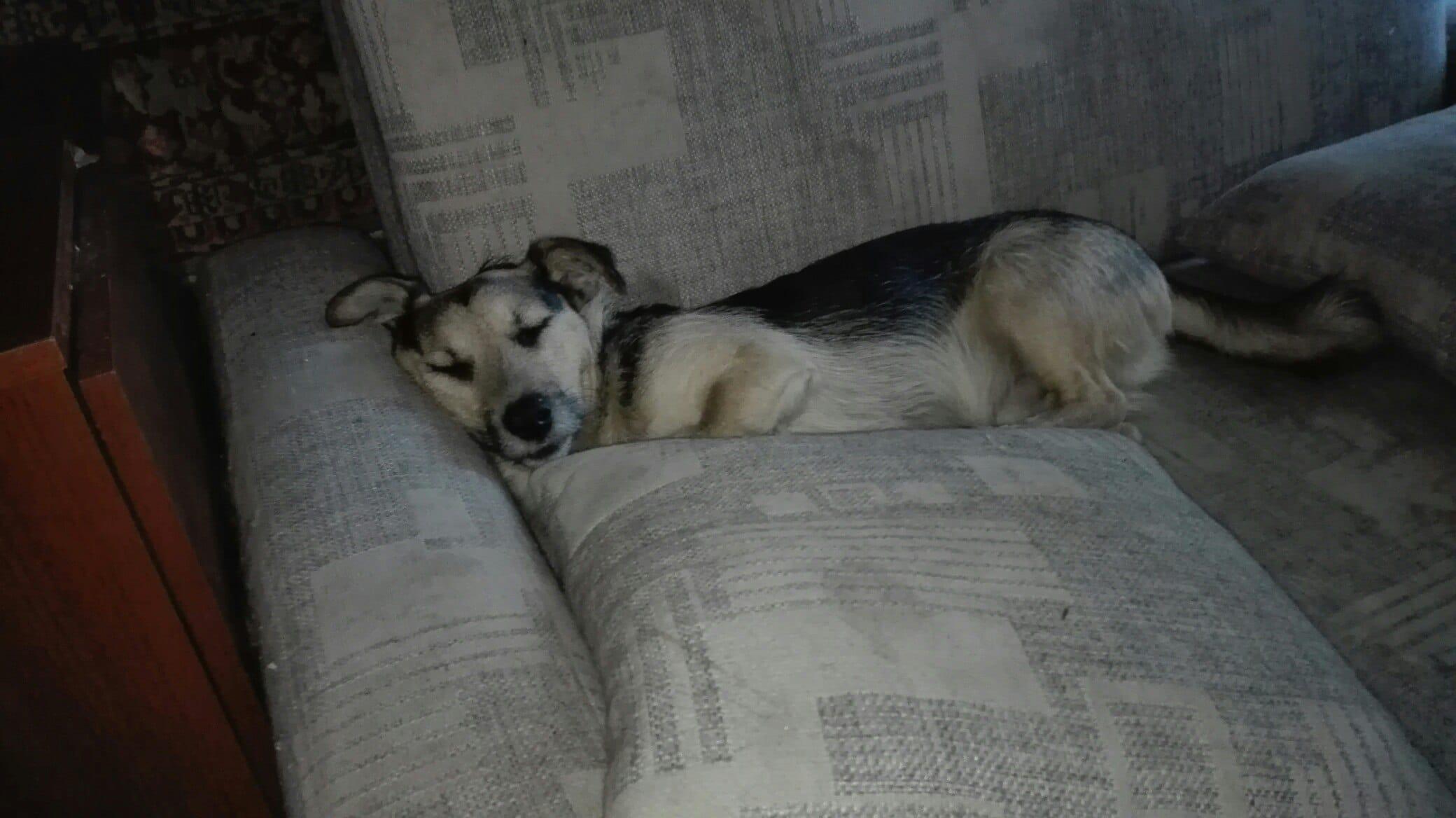 собака на диване