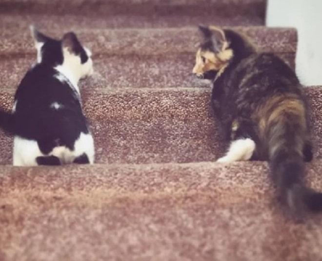 Котята стоят