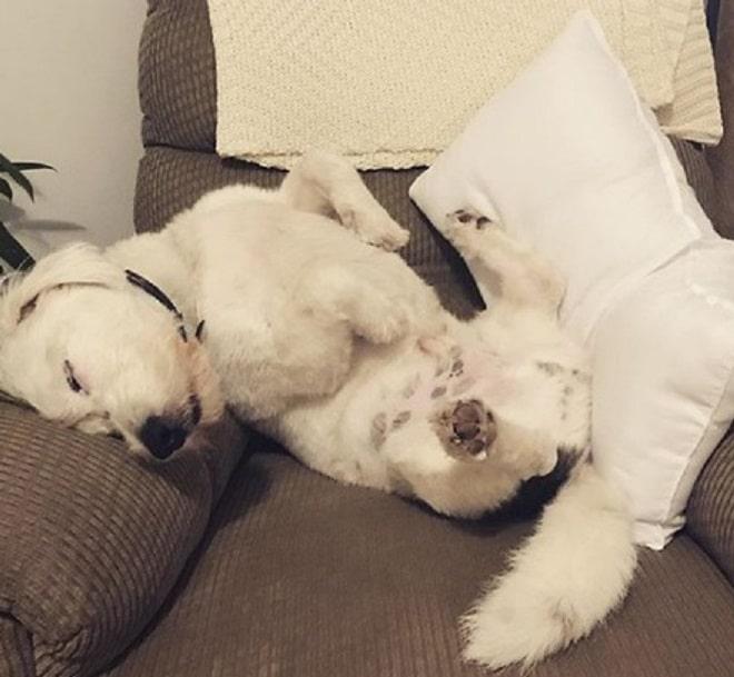 Пес на кресле