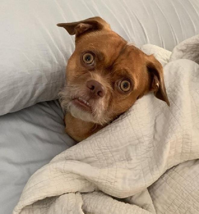 Пес в кровати