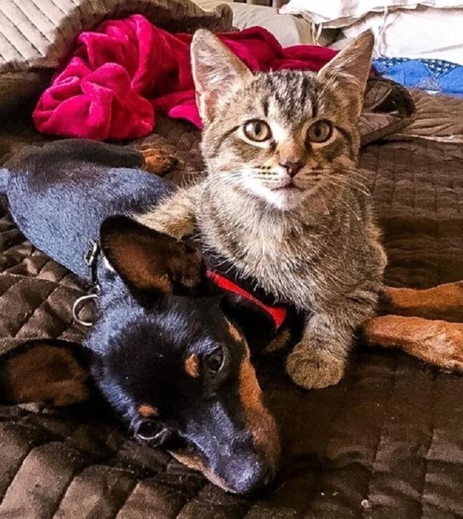 Котенок обнимает собаку