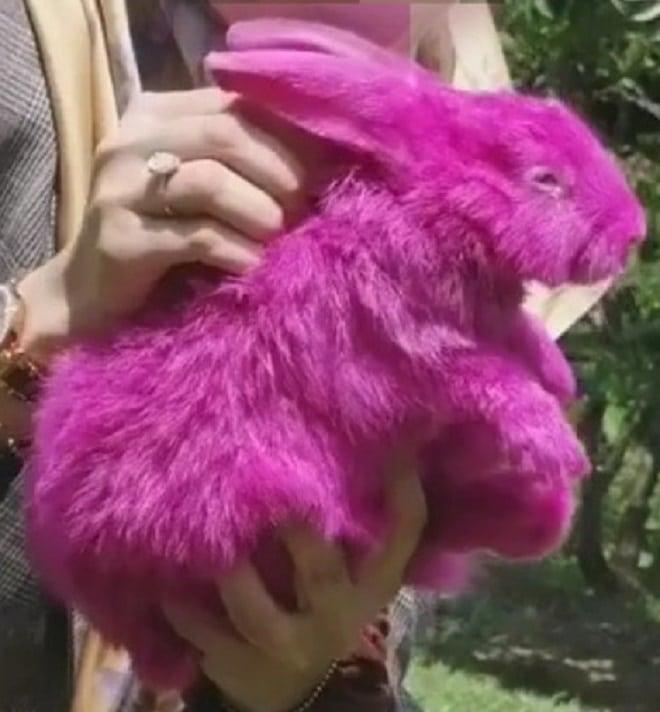 Розовый кролик
