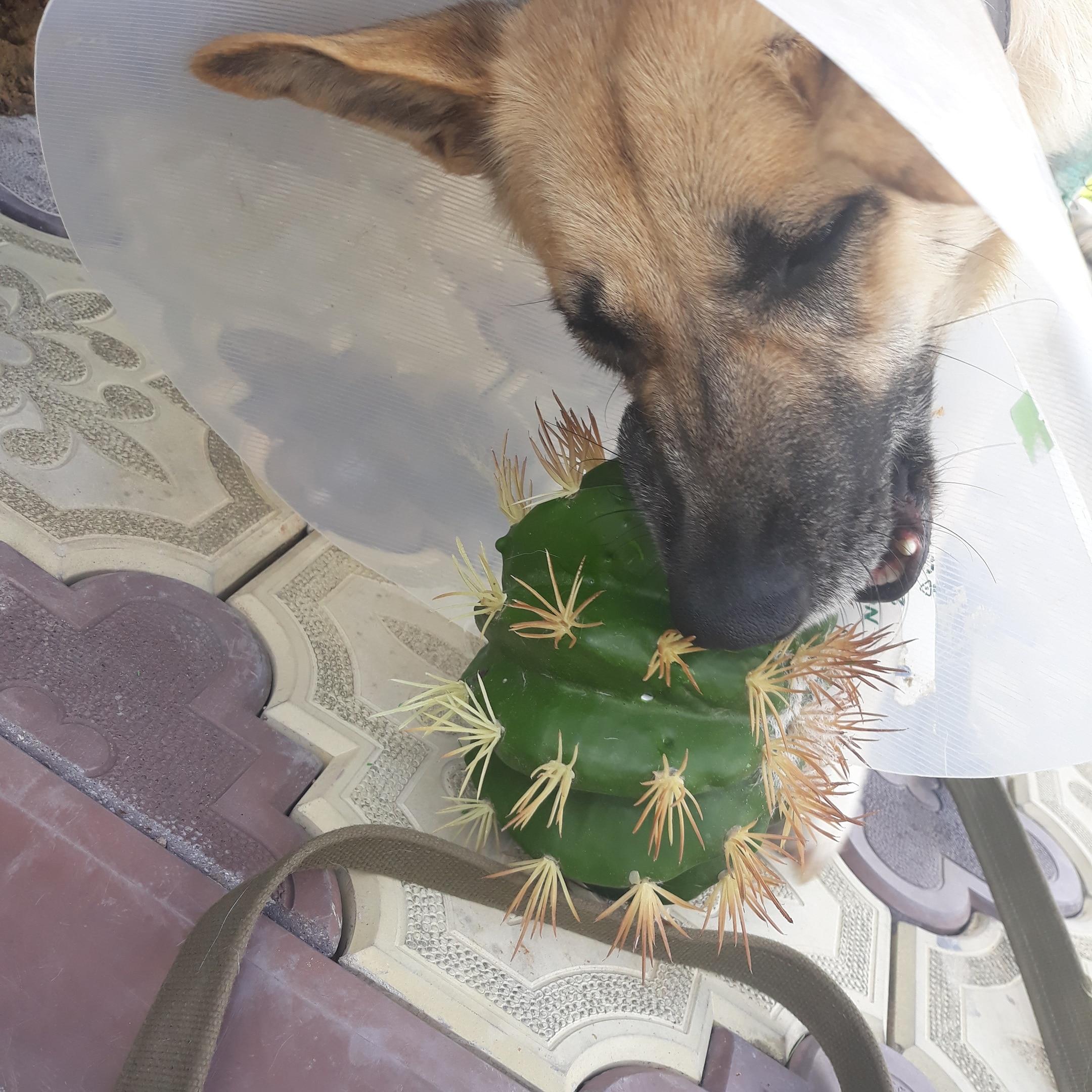 собака и кактус