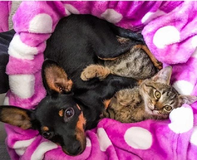 Пес и кот лежит