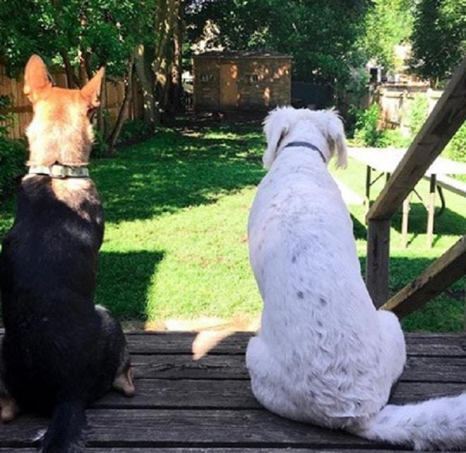 Собаки сидять