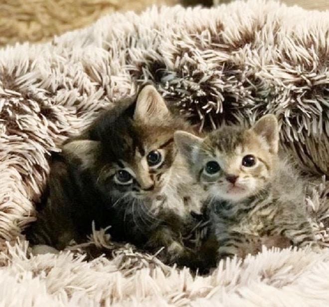 Котята в пледе
