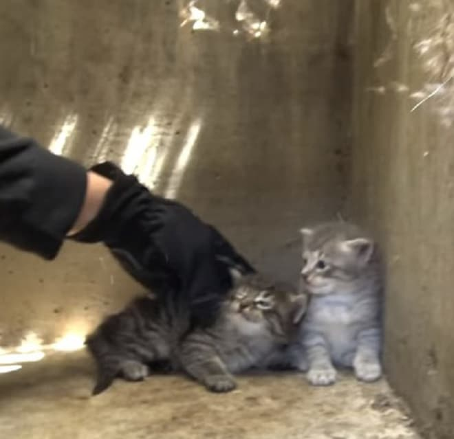 Котят трогают