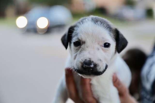 щенок с усами