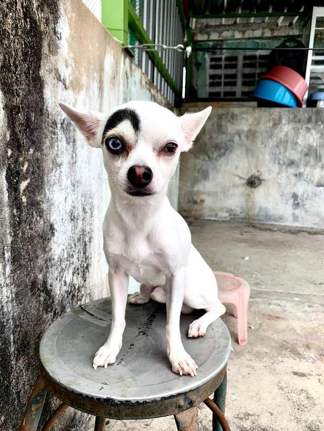 собака с красивой бровью