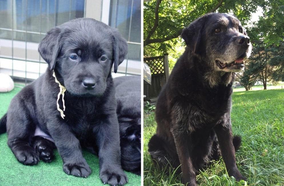собака до и после