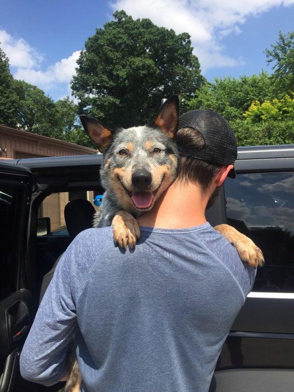 собака и хозяин