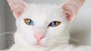 Kitty Olive