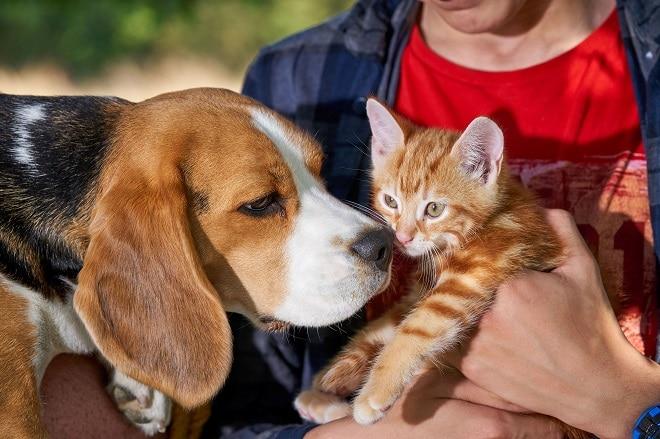 Рыжий котенок и пес