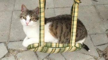 cat Gizmo