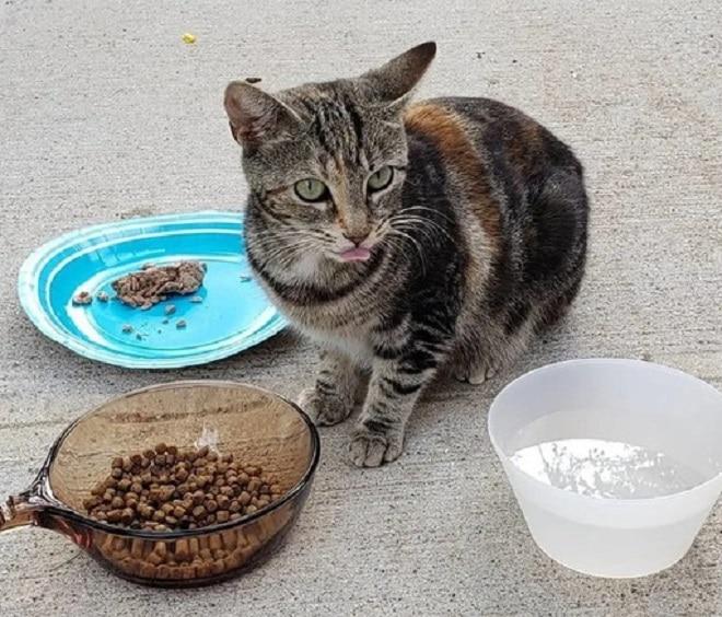 Кошка и еда