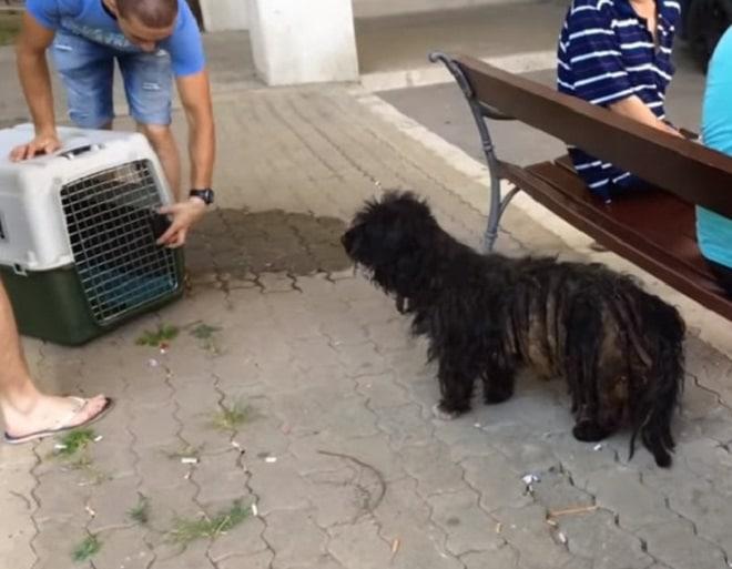 Пес и клетка