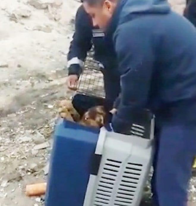 Собака в переноске