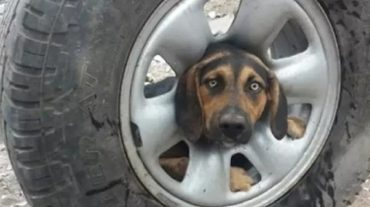 dog in the wheel