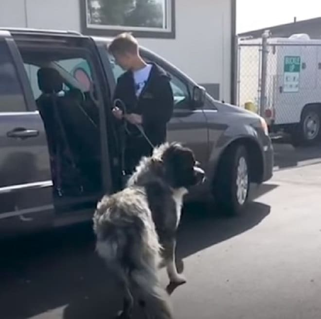 Пес и волонтер