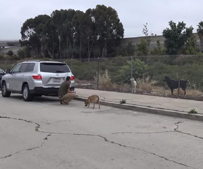 Собаки возле машины