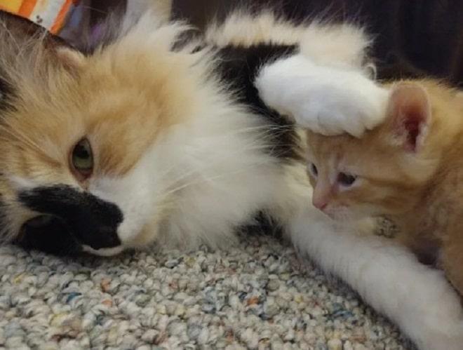Кошка и рыжий котенок
