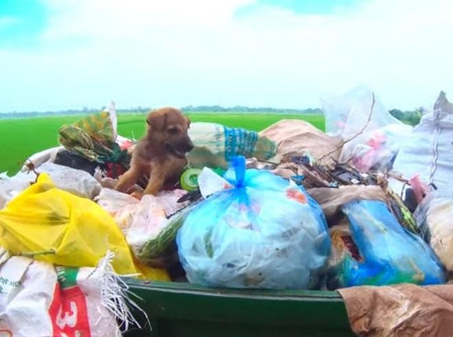 Щенок и мусор