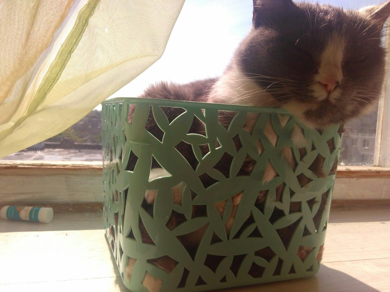 кошка в корзине