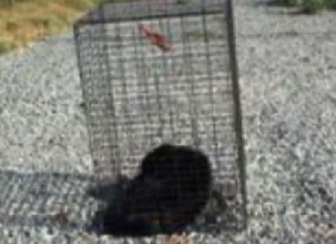 Пес в клетке
