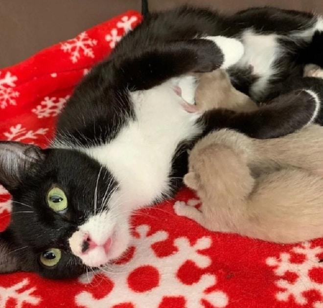 Котята рядом с кошкой
