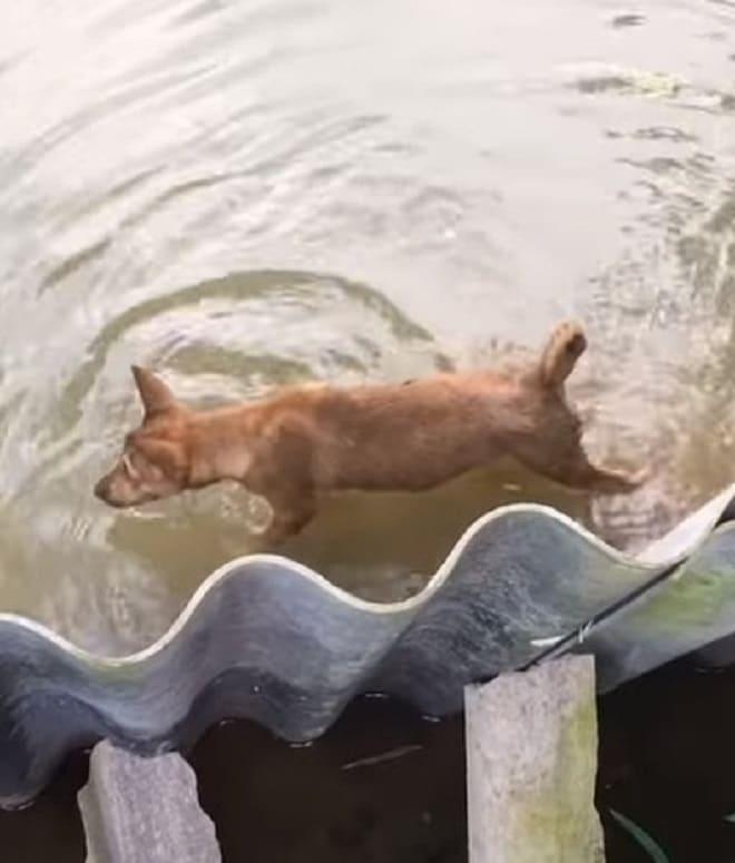 Щенок плывет