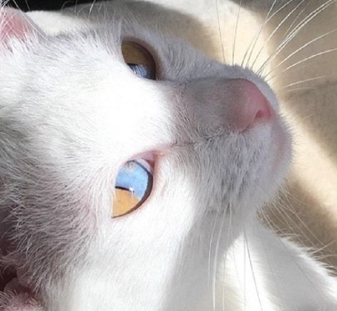 Кошка с необычными глазами