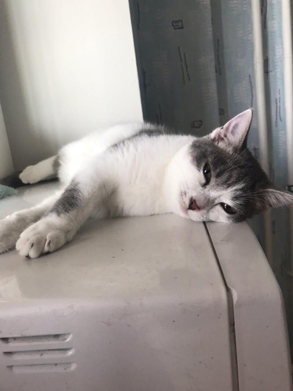 кот на холодильнике