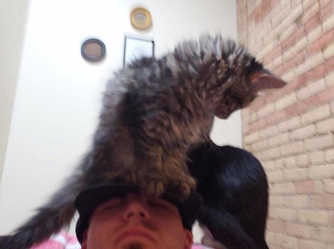 Котенок сидит