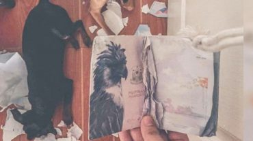 passport and dogs