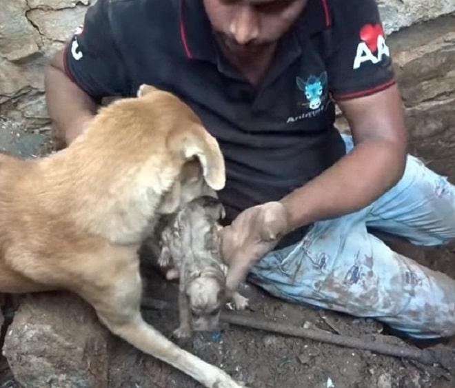 Мужчина щенки и собака