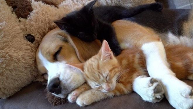 Два котенка и собака