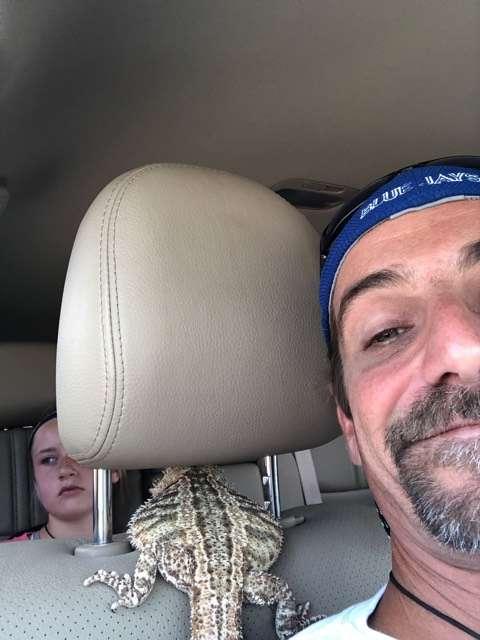 ящерица в машине