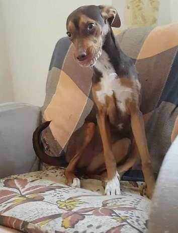 собака украла вставные зубы