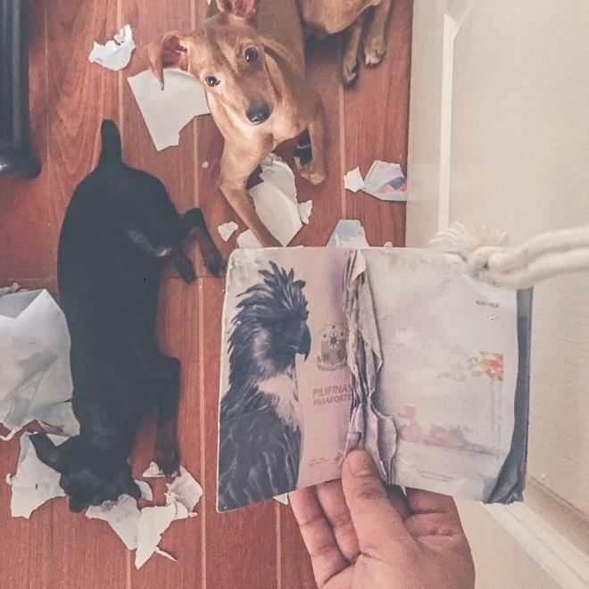 Паспорт и щенки