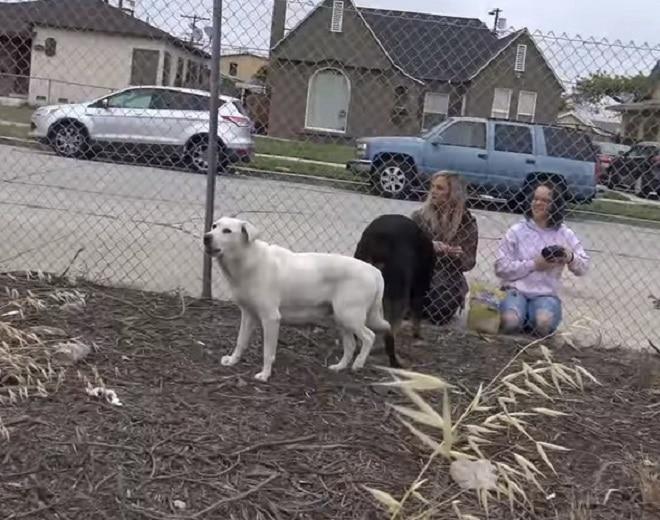 Собаки за сеткой