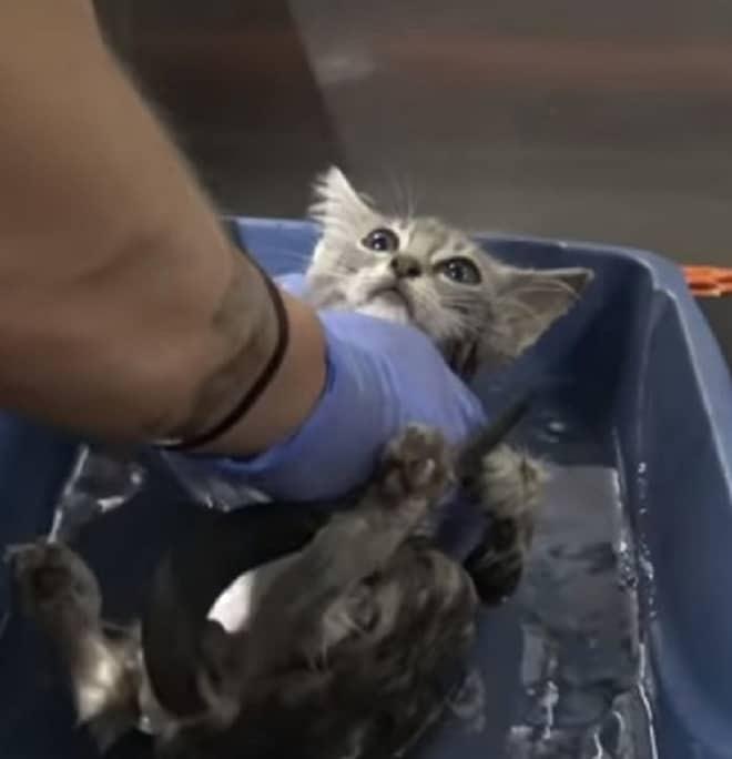 Котенок в воде