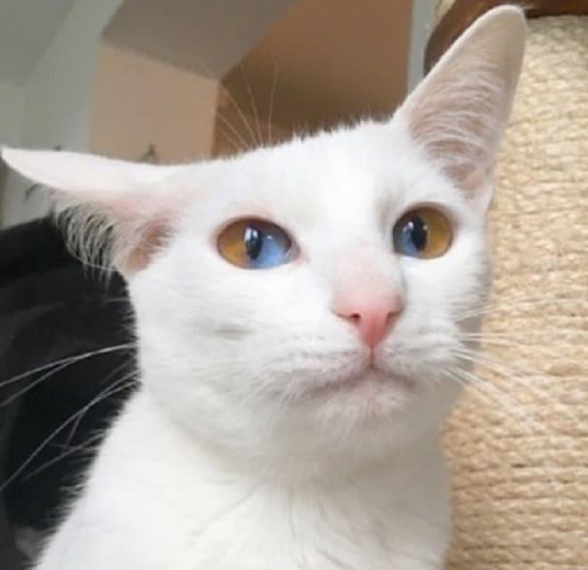 Кошка прижала ухо