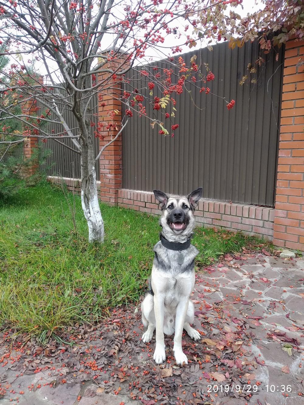 собака во дворе
